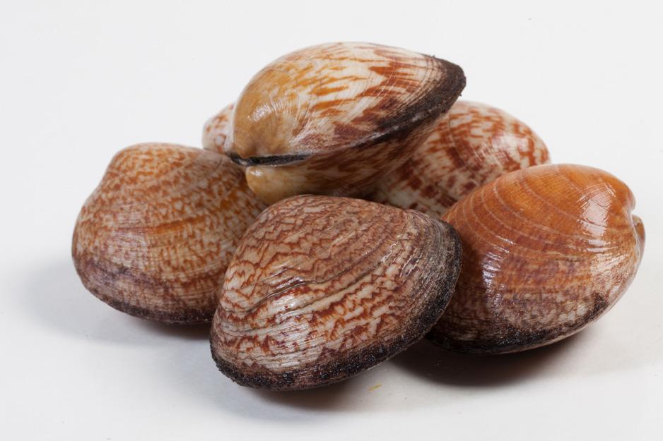 Groothandel-vis-FishXL-schelpdieren-amandes_WL_9452