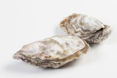 Groothandel-vis-FishXL-schelpdieren-bassin-de-thau_WL_9516