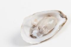 Groothandel-vis-FishXL-schelpdieren-bassin-de-thau_WL_9518