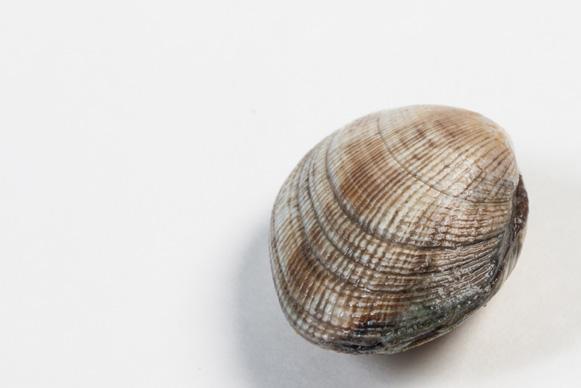 Groothandel-vis-FishXL-schelpdieren-clams_WL_9473