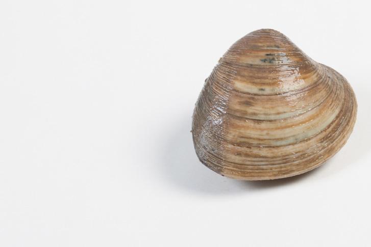 Groothandel-vis-FishXL-schelpdieren-clams_WL_9478