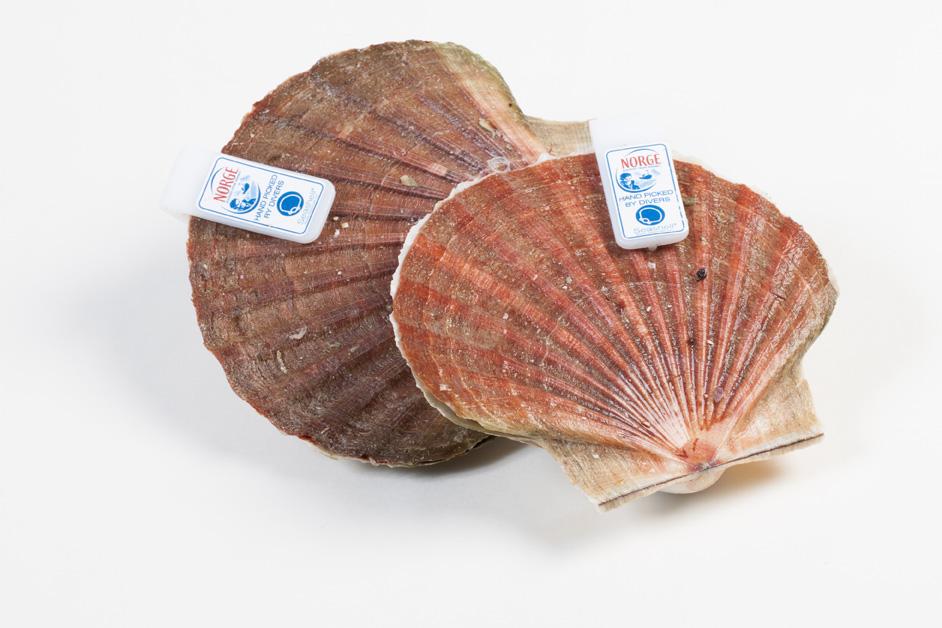 Groothandel-vis-FishXL-schelpdieren-coquilles-st-jacques_WL_9566