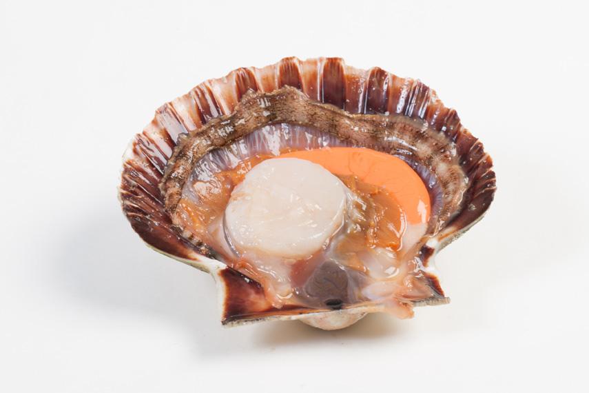 Groothandel-vis-FishXL-schelpdieren-coquilles-st-jacques_WL_9572