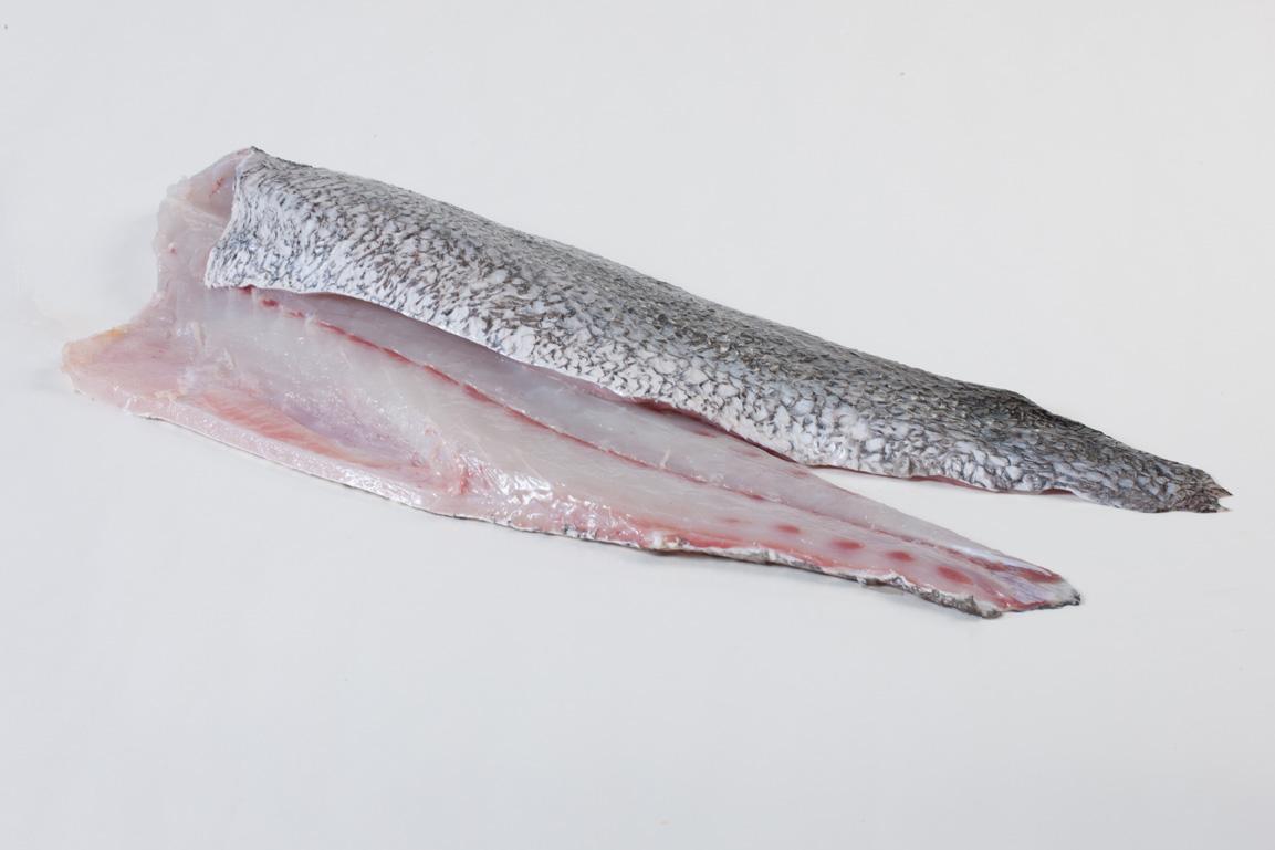 Groothandel-vis-FishXL-vis-corvina_WL_9001