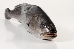 Groothandel-vis-FishXL-vis-corvina_WL_8982