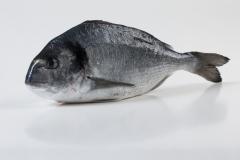 Groothandel-vis-FishXL-vis-dorade_WL_9008