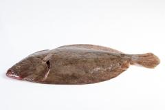 Groothandel-vis-FishXL-vis-griet_WL_9232