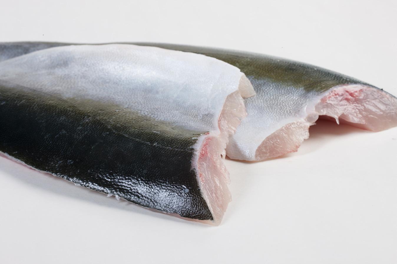 Groothandel-vis-FishXL-vis-hamachi-yellowtail-kingfish_WL_9136