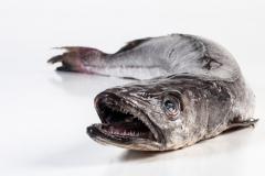 Groothandel-vis-FishXL-vis-heek_WL_9285