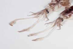 Groothandel-vis-FishXL-vis-pijlinktvis_WL_9273
