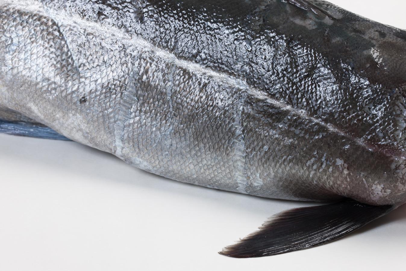 Groothandel-vis-FishXL-vis-kabeljauw_WL_9550