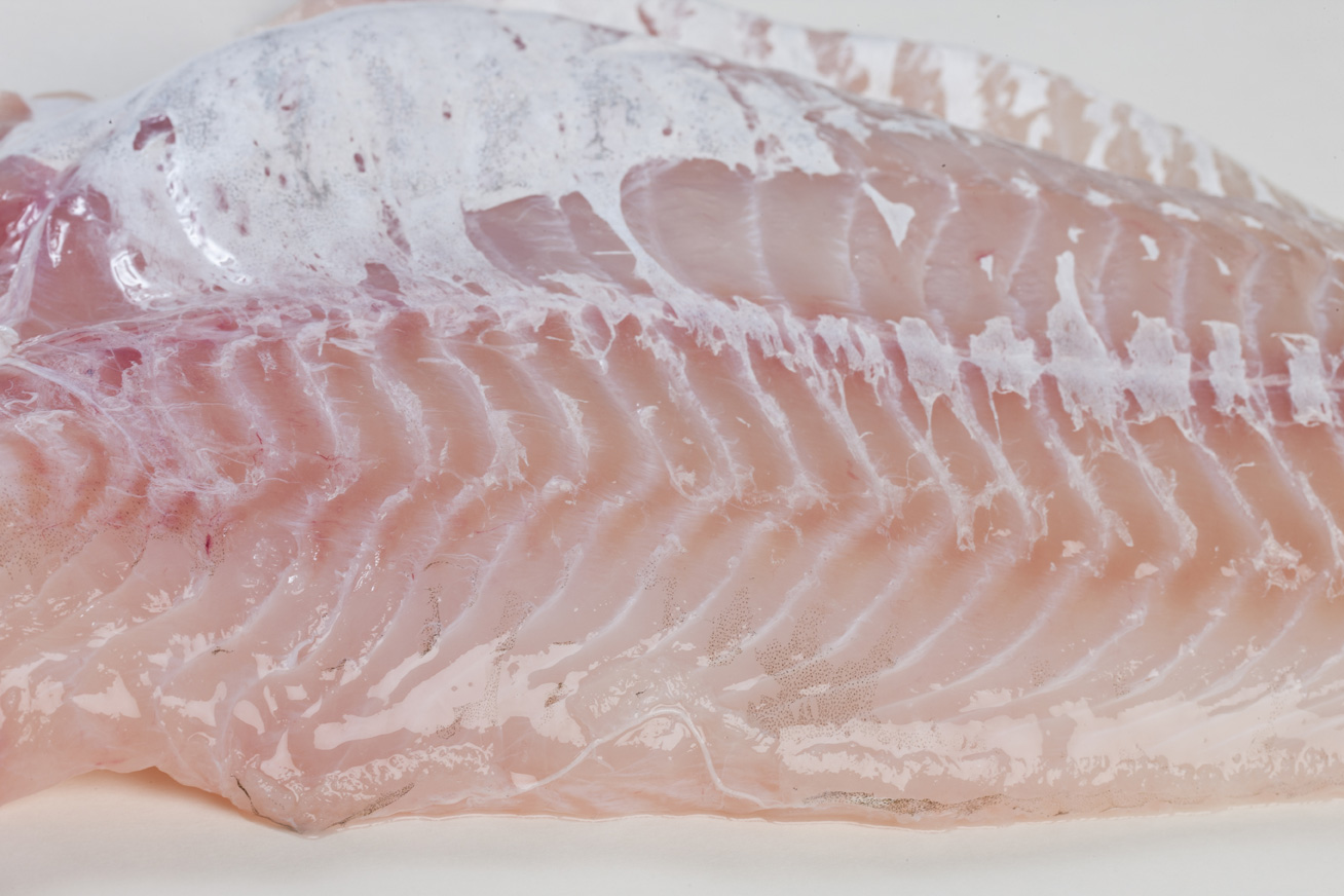 Groothandel-vis-FishXL-vis-kabeljauwfilet_WL_9204