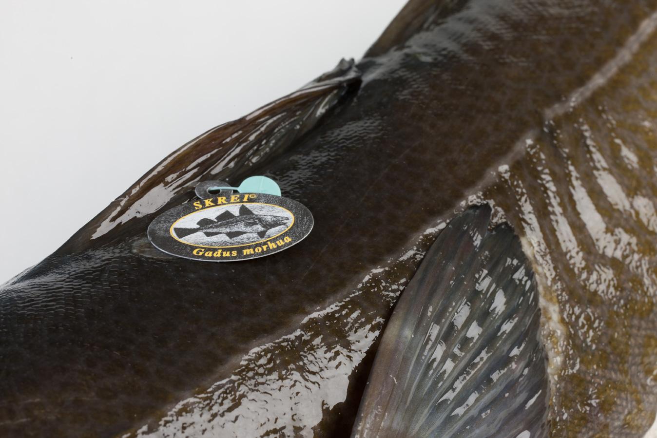 Groothandel-vis-FishXL-vis-skrei-kabeljauw_WL_9081