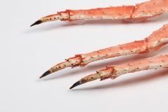 Groothandel-vis-FishXL-schaaldieren-kingkrab_WL_9804
