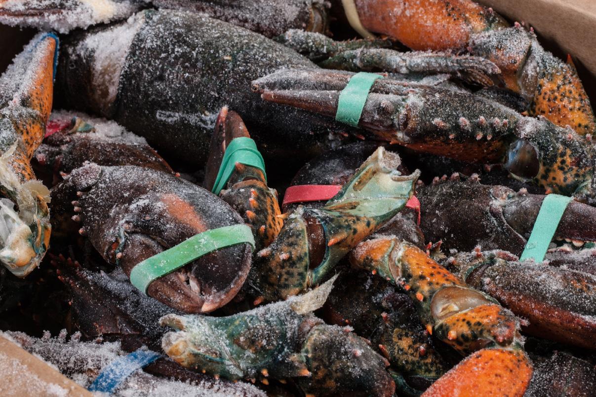 Groothandel-vis-FishXL-schaaldieren-kreeft_WL_9770