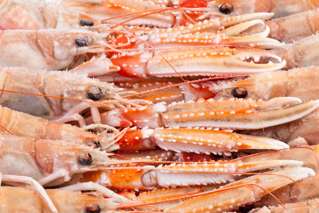 Groothandel-vis-FishXL-schaaldieren-langoustine_WL_9683