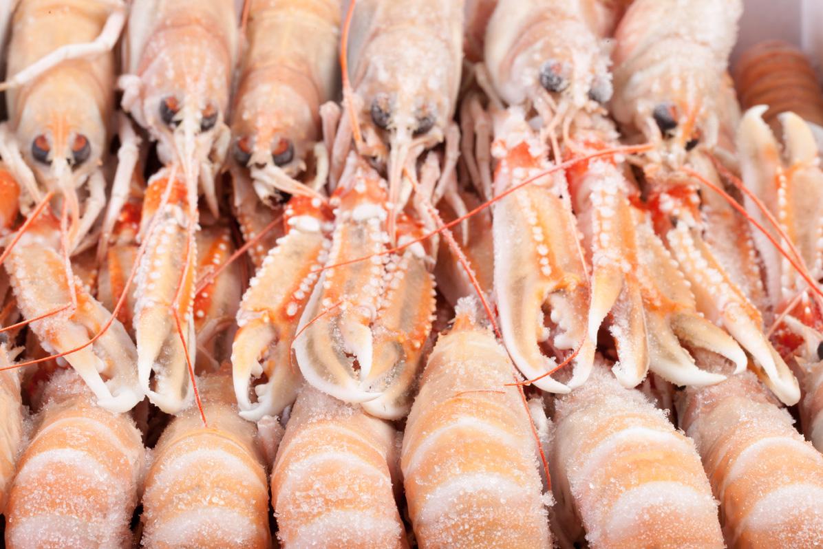 Groothandel-vis-FishXL-schaaldieren-langoustine_WL_9685