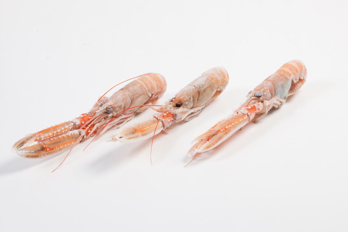 Groothandel-vis-FishXL-schaaldieren-langoustine_WL_9690