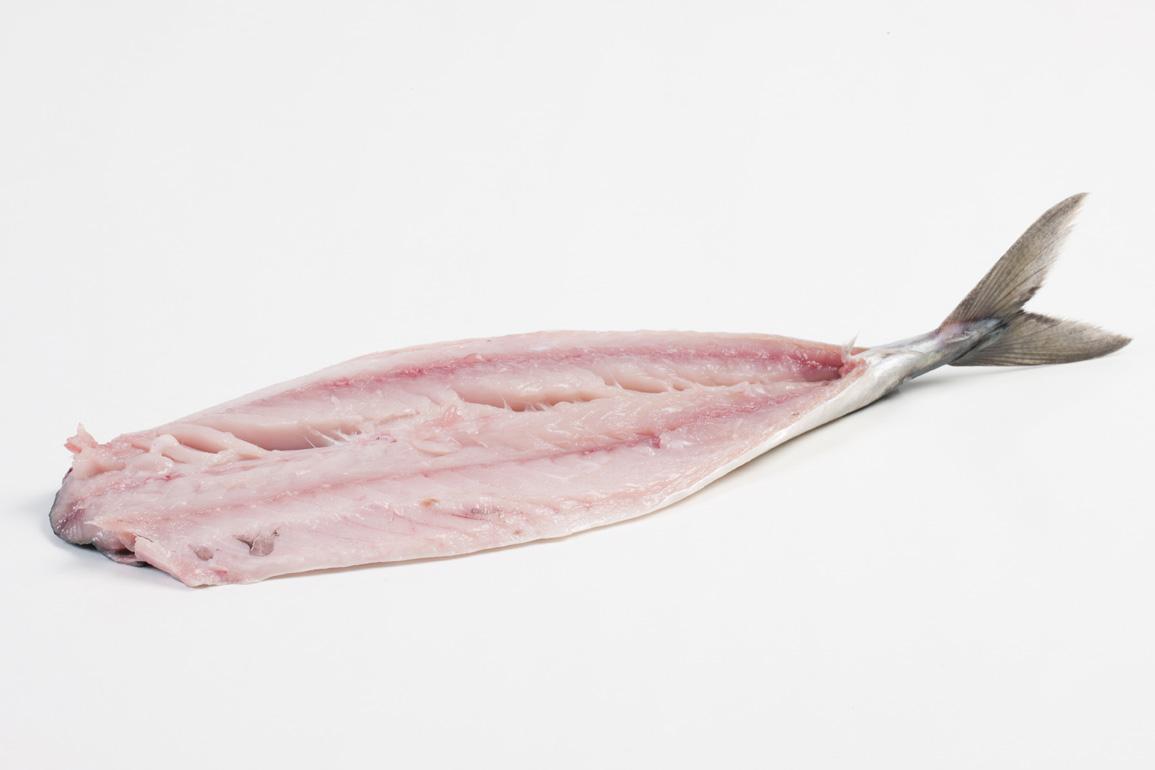 Groothandel-vis-FishXL-vis-makreel_WL_9616