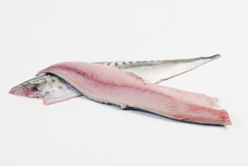 Groothandel-vis-FishXL-vis-makreel_WL_9618