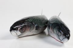 Groothandel-vis-FishXL-vis-makreel_WL_9608