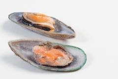 Groothandel-vis-FishXL-schelpdieren-mosselen_WL_9808