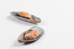 Groothandel-vis-FishXL-schelpdieren-mosselen_WL_9809