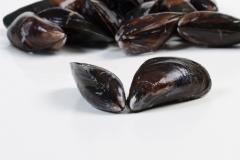 Groothandel-vis-FishXL-schelpdieren-zeeuwse-mossel_WL_9942