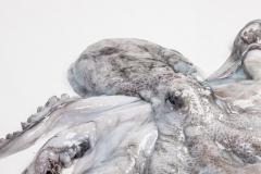 Groothandel-vis-FishXL-vis-octopus_WL_9590