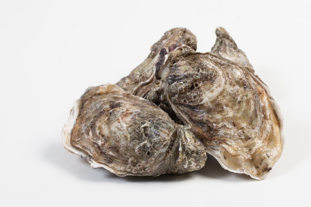 Groothandel-vis-FishXL-schelpdieren-oesters-bretagne_WL_9522