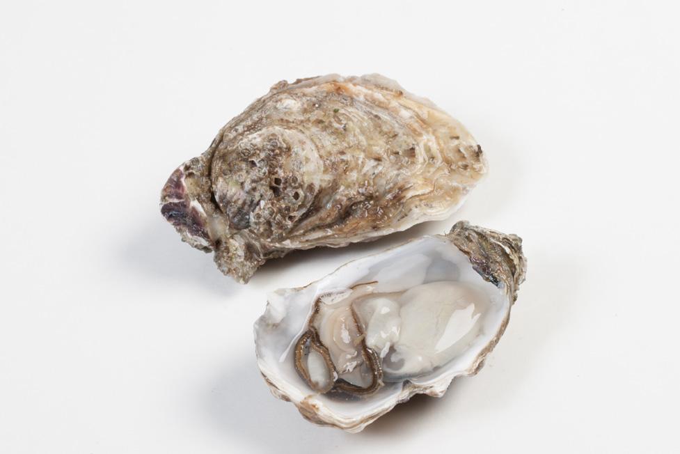 Groothandel-vis-FishXL-schelpdieren-oesters-bretagne_WL_9524