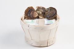 Groothandel-vis-FishXL-schelpdieren-zeeuwse-platte-oesters_WL_9838
