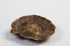 Groothandel-vis-FishXL-schelpdieren-zeeuwse-platte-oesters_WL_9840