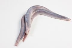 Groothandel-vis-FishXL-vis-paling_WL_9614