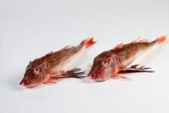 Groothandel-vis-FishXL-vis-rode-poon_WL_9326