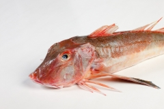 Groothandel-vis-FishXL-vis-rode-poon_WL_9333