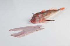 Groothandel-vis-FishXL-vis-rode-poon_WL_9336