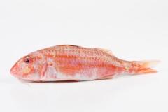 Groothandel-vis-FishXL-vis-rode-mul_WL_8994