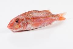 Groothandel-vis-FishXL-vis-rode-mul_WL_8995