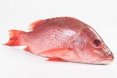 Groothandel-vis-FishXL-vis-rode-snapper_WL_9545