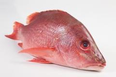 Groothandel-vis-FishXL-vis-rode-snapper_WL_9547