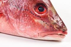 Groothandel-vis-FishXL-vis-rode-snapper_WL_9548