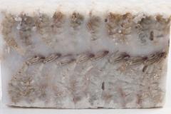 Groothandel-vis-FishXL-schaaldieren-scampi_WL_9643