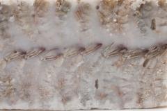 Groothandel-vis-FishXL-schaaldieren-scampi_WL_9644
