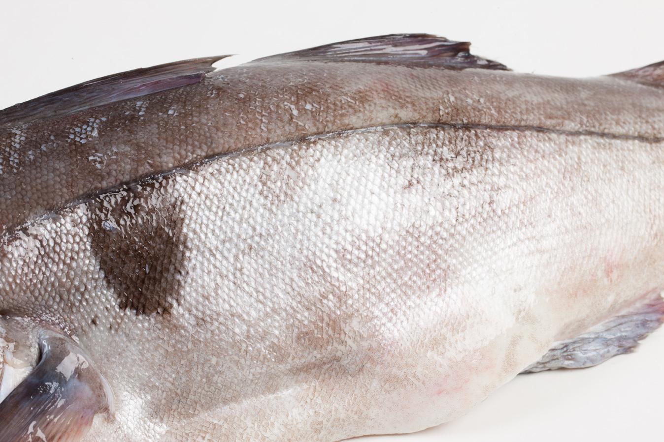 Groothandel-vis-FishXL-vis-schelvis_WL_9561