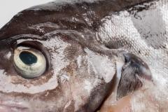 Groothandel-vis-FishXL-vis-schelvis_WL_9559