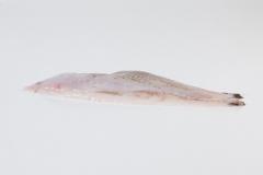 Groothandel-vis-FishXL-vis-scholfilet_WL_9015