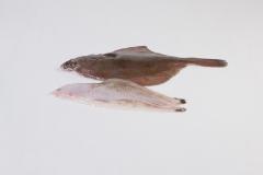Groothandel-vis-FishXL-vis-scholfilet_WL_9016