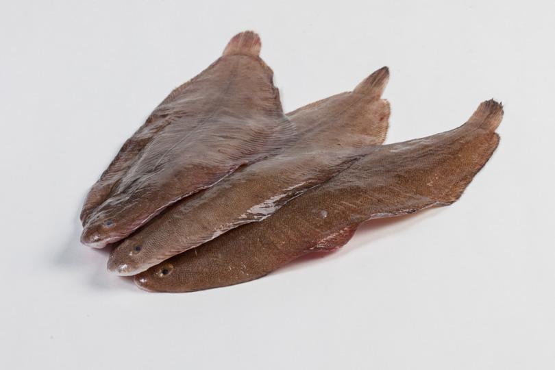 Groothandel-vis-FishXL-vis-tong_WL_9150