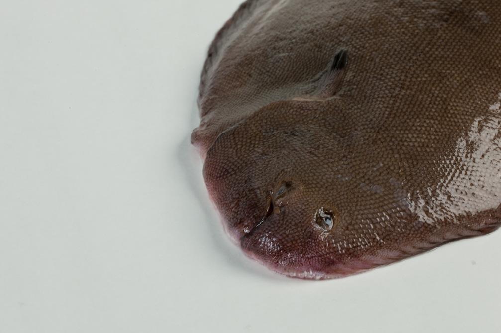 Groothandel-vis-FishXL-vis-tong_WL_9160